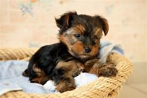 Laisser Un Chien Seul Quand On Travaille : comment prot ger mon chien des morsures de tiques ~ Medecine-chirurgie-esthetiques.com Avis de Voitures