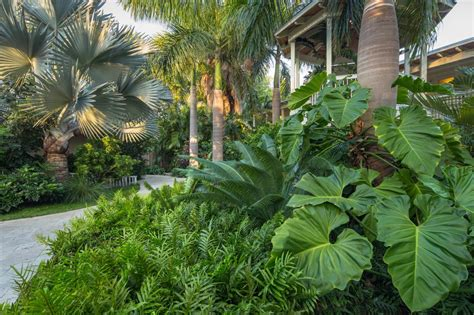 tropical style gardens design a tropical garden hgtv