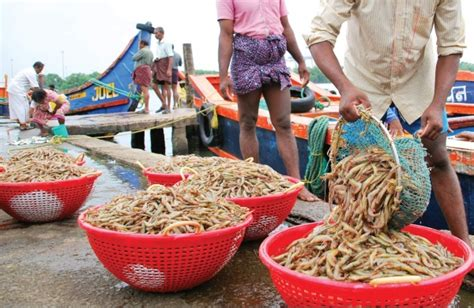 Kerala Fishing Boat Operators Association by Fishing Boat Owners Forum Rejects Move To Stop Regn Of