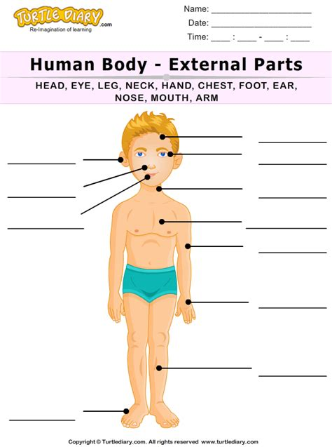 Human Body Parts Worksheets