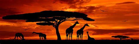 Exklusiv-Erlebnis Afrika mit Wildes Afrika Erlebnis-Safari