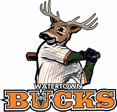 Baseball Bucks League Deer Watertown Minor Sports