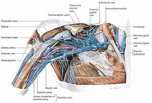 Anat 101 Study Guide  2013-14 Thomas