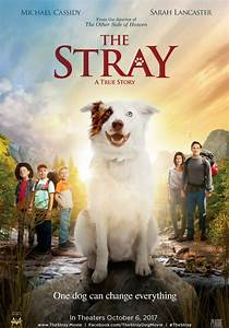 'The Stray' Movie Tells a Heartwarming Story of How a ...