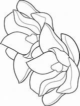 Magnolia Coloring Pages Flower Flowers Template Printable Colors Recommended sketch template