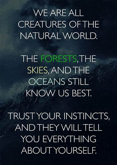 Nature Words Describe Everything Three Forest Buzzfeed