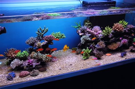 Aquascaping Techniques by April 23 2016 Professional Demo Reef Aquascaping
