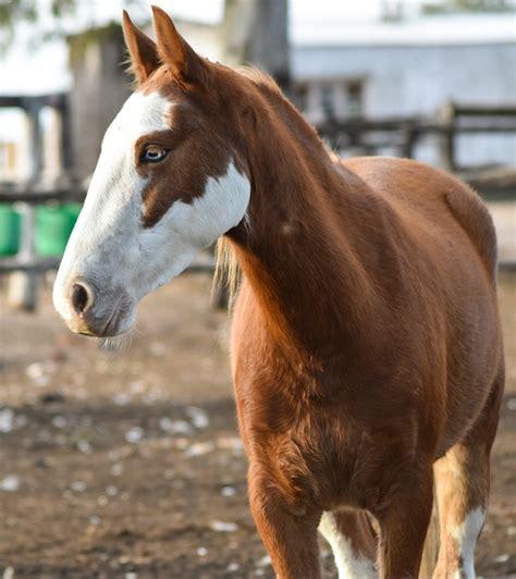 photo horse animal mare colt  image