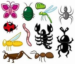 Invertebrates | List, Characteristics of Invertebrates ...