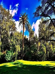 Garden Full Hd Wallpapers 3d Jarmansafd Dog Wallpaper ...