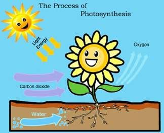 photosynthesis  kids  inspired home