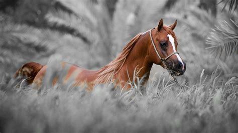 Horse Wallpaper For Windows #nvm