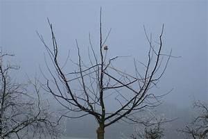 Bäume Verschneiden Obstbäume : baehler gartenbau obstb ume ~ Lizthompson.info Haus und Dekorationen