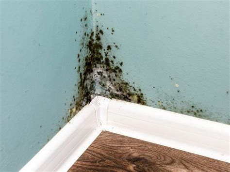 Wonderful Mold In House Symptoms To Choose