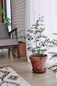 Eucalyptus Plante D Intérieur : conseils pour faire pousser un eucalyptus en int rieur lifestyle mode d co ~ Melissatoandfro.com Idées de Décoration