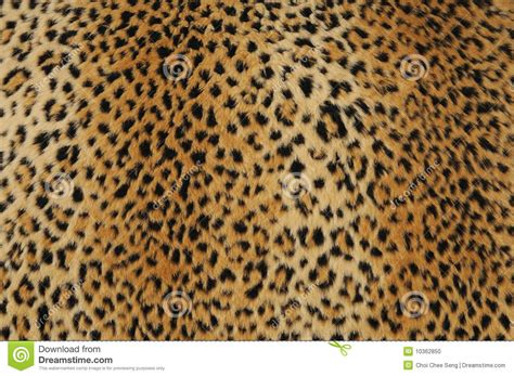 leopard skin stock photo image  abstract print skin