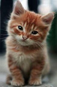 Kitten Cute Kitty Cat