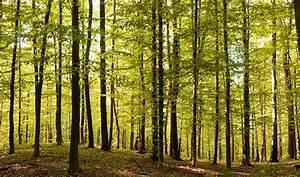Vom Wald zum Möbel  Initiative Pro Massivholz