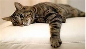 Enlever Odeur Urine Chien : mon chat a fait pipi sur le canap tout pratique ~ Nature-et-papiers.com Idées de Décoration