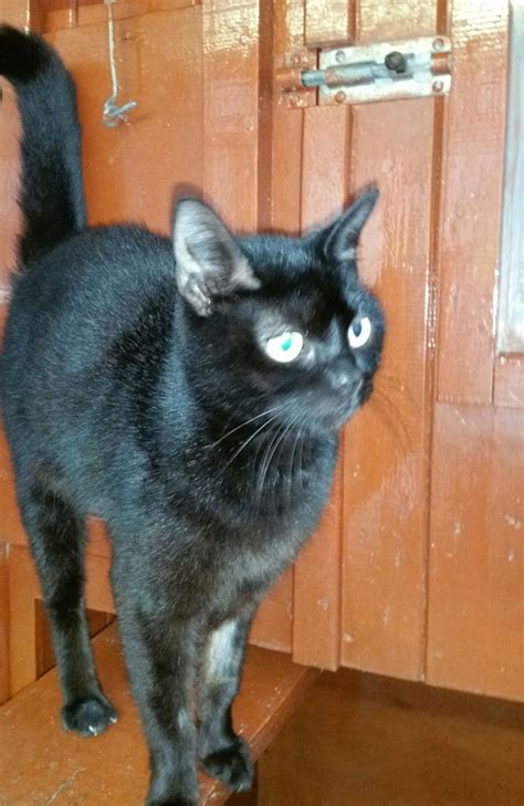 Pudding Rehomed Animals Rehomed Rspca Tameside And