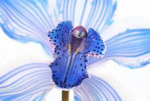 Orchidee Vanda Pflege : anco orchidee das sollten sie bei der richtigen pflege ~ Lizthompson.info Haus und Dekorationen