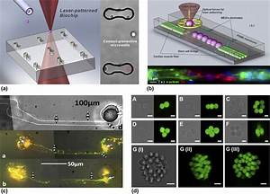Laser-assisted biofabrication in tissue engineering and ...