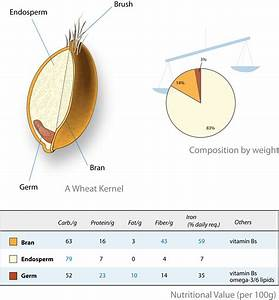 File Wheat-kernel Nutrition Png