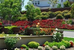 Böschung Bepflanzen Fotos : bodendeckerrosen arten f r b schung garden pinterest garten bepflanzung und gartengestaltung ~ Orissabook.com Haus und Dekorationen