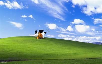 Xp Windows Funny Bliss Desktop Backgrounds Wallpapers