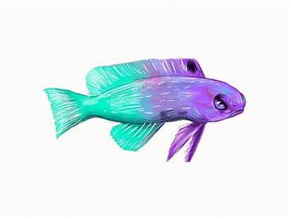 Fish Animation Dribbble Hello Illustrator