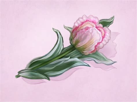 flower drawings  psd ai eps format