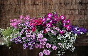 Künstliche Blumen Für Balkonkästen : musterk sten f r balkonblumen blumen im blumentopf ~ A.2002-acura-tl-radio.info Haus und Dekorationen