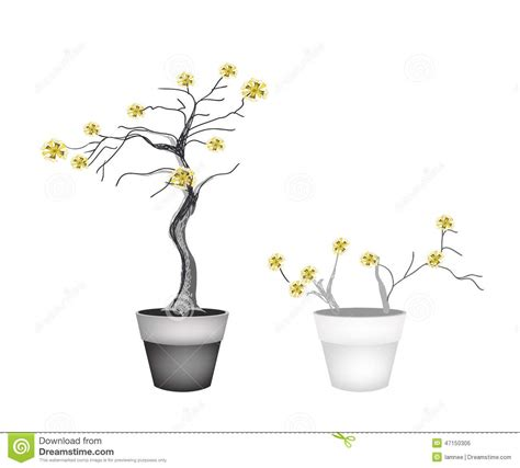 vasi per alberi bei alberi gialli in due vasi da fiori illustrazione