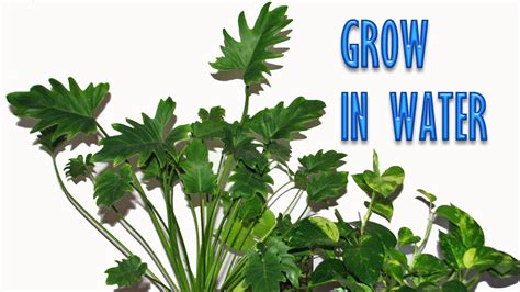 grow ls for indoor plants grow indoor plants in water for years youtube