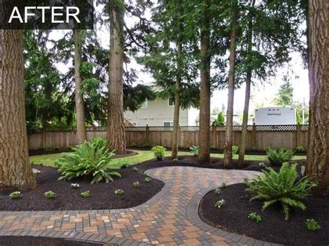 pine trees garden trees home and