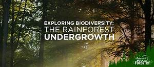Exploring Biodiversity  The Rainforest Undergrowth