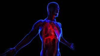 Body Systems Digestive System Clip Art
