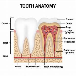 Scared About Having A Root Canal  What You Need To Know