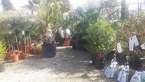 Palmen Kaufen Baumarkt : winterharte palmen exoten olivenbaeume uvm 7 2542 kottingbrunn willhaben ~ Orissabook.com Haus und Dekorationen