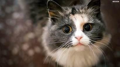Cats Cat Begging Windows Desktop Wallpapers Laptop