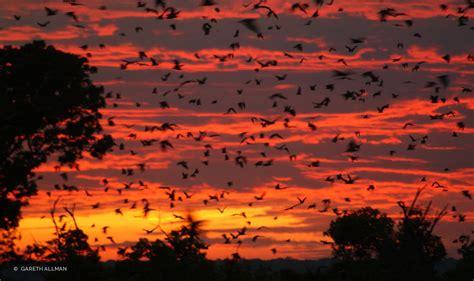 the bat migration so far kasanka national park
