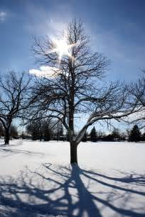 sun through winter tree branches picture free photograph photos domain
