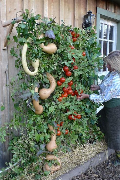 vertical vegetable garden vertical gardening on the patio