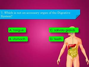 Digestive System Interactive Game