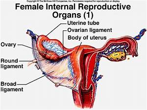 12 best women images on Pinterest | Female reproductive ...
