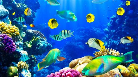Fishes: Ocean Fishes Nature Sea Sealife Underwater Fish ...