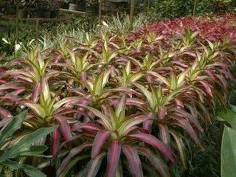 bisnis budidaya tanaman hias bunga anggrek orchid