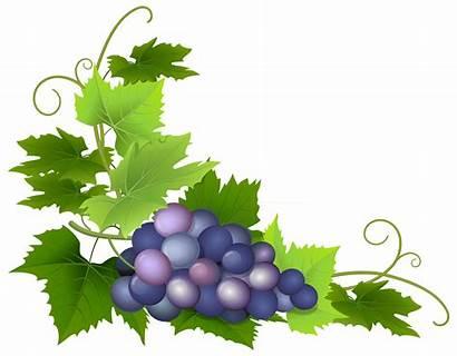Grape Clipart Clip Grapes Vine Transparent Leaves