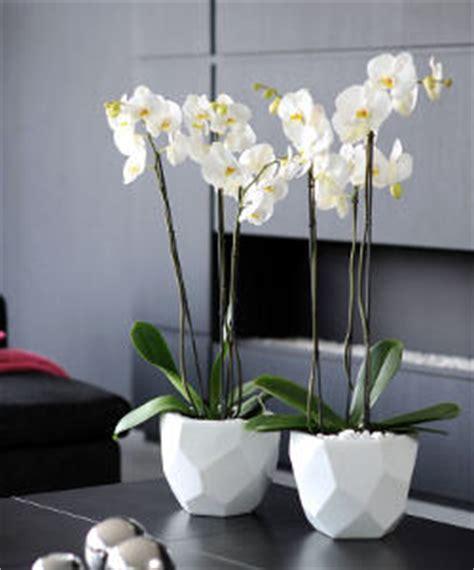 faire durer la floraison d une orchid 233 e