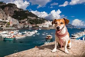 Urlaub Mit Hund Am Meer Italien : urlaub mit hund alle infos und wertvolle tipps ~ Kayakingforconservation.com Haus und Dekorationen